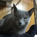 今週のルチヲ6/白目をむく猫