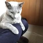 今週のルチヲ3/挟まりたがる猫