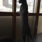 今週のルチヲ11/屋根から落ちる雪が気になる猫