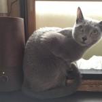 今週のルチヲ18/挟まるのが好きな猫
