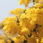 花粉症やアトピーなどのアレルギー症状が8割以上の人が治る方法