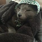 今週のルチヲ27/寒い日は泥棒スタイルで寝る猫