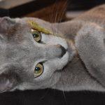 今週のルチヲ29/ねこじゃらしが大好きな猫