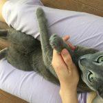 今週のルチヲ34/爪切りはちょっと苦手な猫