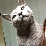今週のルチヲ43/照明のひもで遊ぶ猫