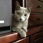 今週のルチヲ45/実家で冒険をする猫