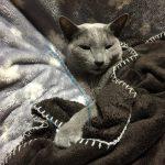 今週のルチヲ57/まだまだ遊ぶのが好きな猫
