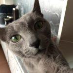 今週のルチヲ59/ごはんをねだる猫