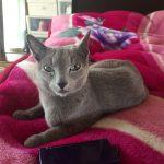 今週のルチヲ64/毛布がやめられない猫