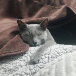今週のルチヲ75/収納ボックスで笑わせてくる猫