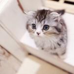 猫を飼う覚悟と準備、幸せな猫ライフを送るには