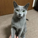 今週のルチヲ2/お手をする猫