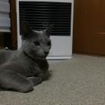 今週のルチヲ1/ストーブでくつろぐ猫