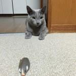 今週のルチヲ4/ねずみで遊ぶ猫