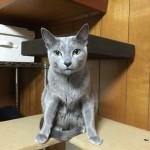 今週のルチヲ7/キャットタワーに乗った猫