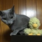今週のルチヲ13/彼女がいる猫