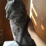 今週のルチヲ12/シャンプーに慣れた猫