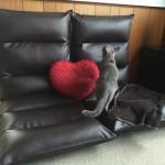 猫の粗相にも最適な1億円座椅子を買ってみたレビュー・座ってみた感想を正直にお伝え