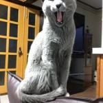 今週のルチヲ17/座椅子の上で待つ猫
