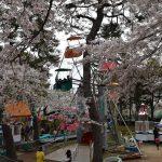 函館公園の桜を見に行く時の無料駐車場・出店情報 全国陶器まつりにも行ってきました