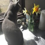 今週のルチヲ23/花に興味がわいた猫