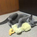 今週のルチヲ25/彼女と戯れる猫