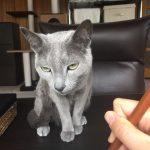 今週のルチヲ26/手羽先を盗もうとして怒られた猫