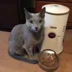 自動餌やり機を使って2年半経ちました・猫や小型犬用給餌機わんにゃんぐるめレビュー