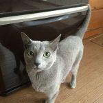 今週のルチヲ36/冷蔵庫のマグネットが気になる猫