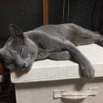 今週のルチヲ54/寝てばかりいる猫