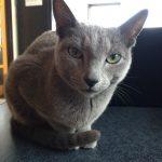 今週のルチヲ56/色んなアピールをする猫