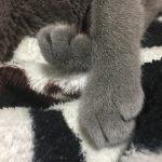 今週のルチヲ66/一日の70%は膝にいる猫