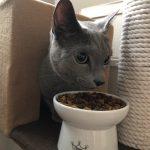 今週のルチヲ80/地震に怯える猫