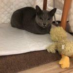 今週のルチヲ83/夢こたつを買ってもらった猫
