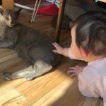 今週のルチヲ84/赤ちゃんと猫シリーズ1